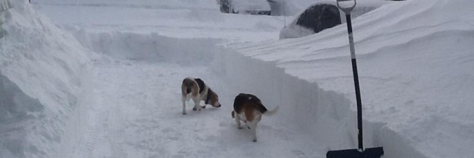 beagleblizzard